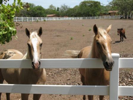 Horses at the Lost Coast at Boca Chica